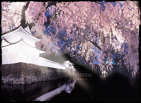 Best place to see cherry blossoms in Japan nijo castle